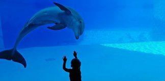 Canadá lei proíbe baleias golfinhos mantidos cativeiros