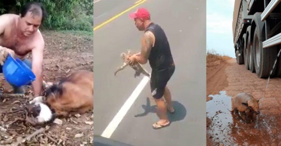 caminhoneiros proteção animais rodovias brasil