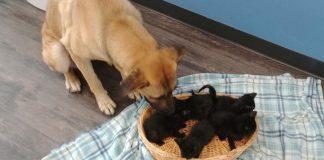 cachorra abandonada resgatada estrada cuidando filhotes gato