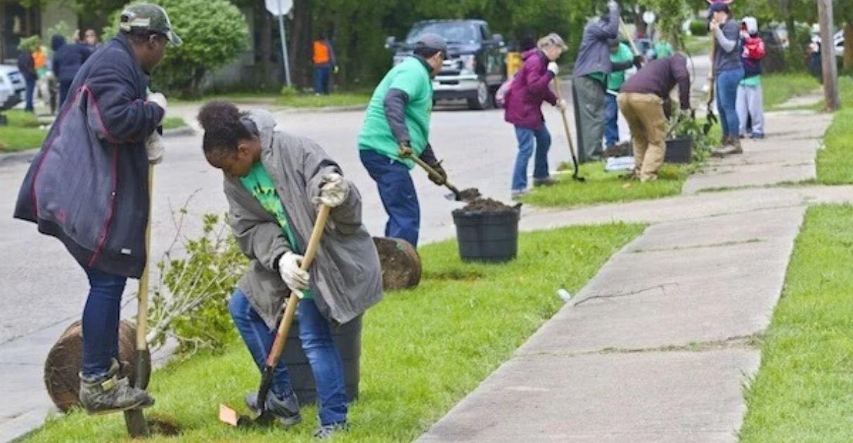 Cidade dos EUA planta centenas de árvores em rota de estudantes para reduzir ilhas de calor 1