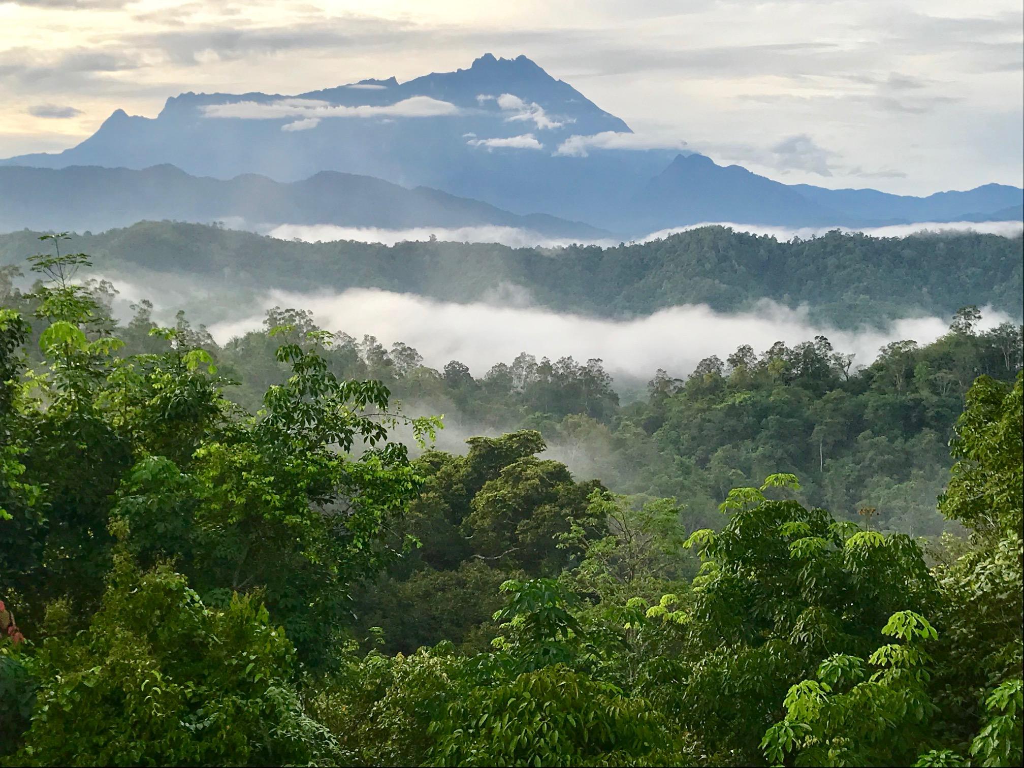 ilha de bornéu lar dos orangotangos