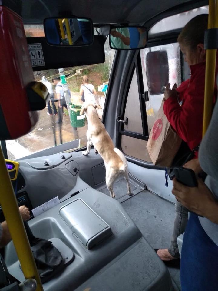 Idosa adota cão de rua terminal leva ele para casa ônibus
