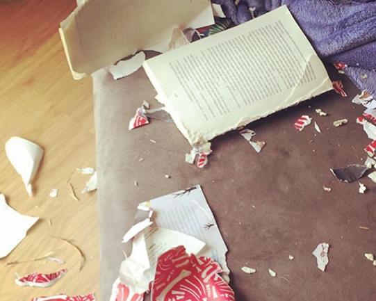 Livro rasgado depois de ser devorado por cachorrinha