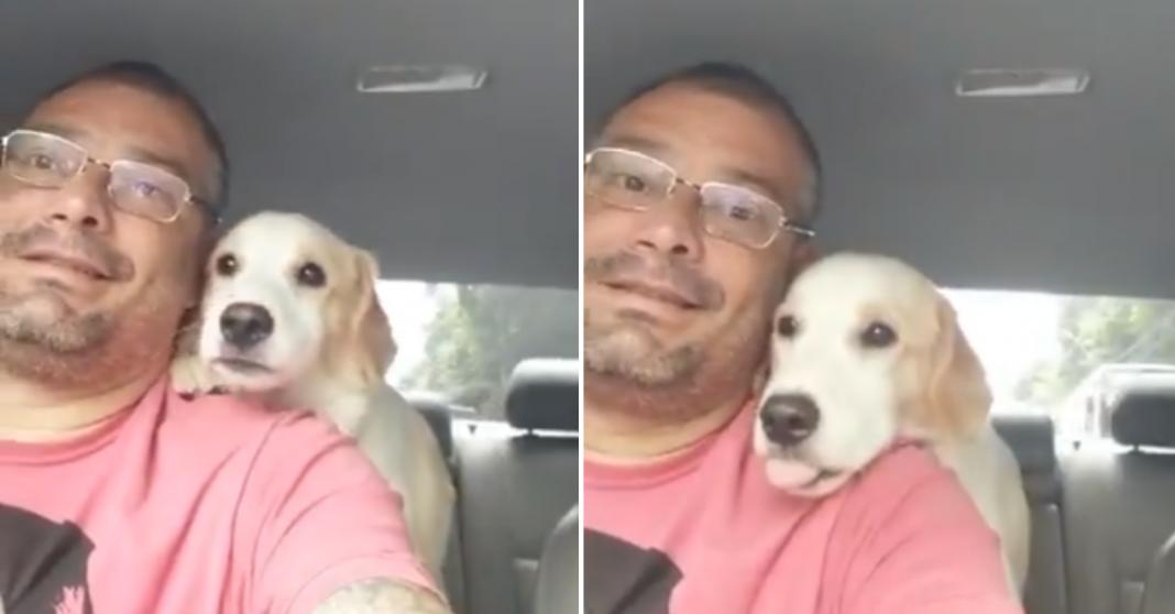 """Táxi dog faz sucesso com vídeos fofos de seus """"passageiros""""; assista"""