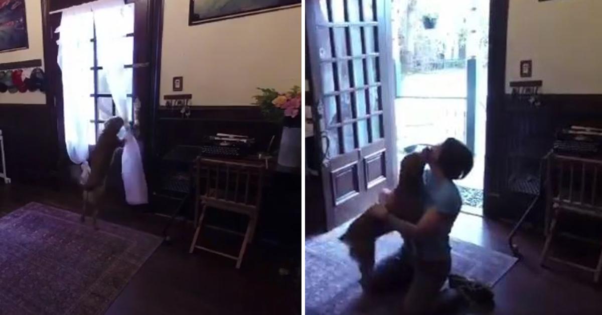 Após quase 1 ano, astronauta reencontra sua cachorrinha e vídeo viraliza; assista 2