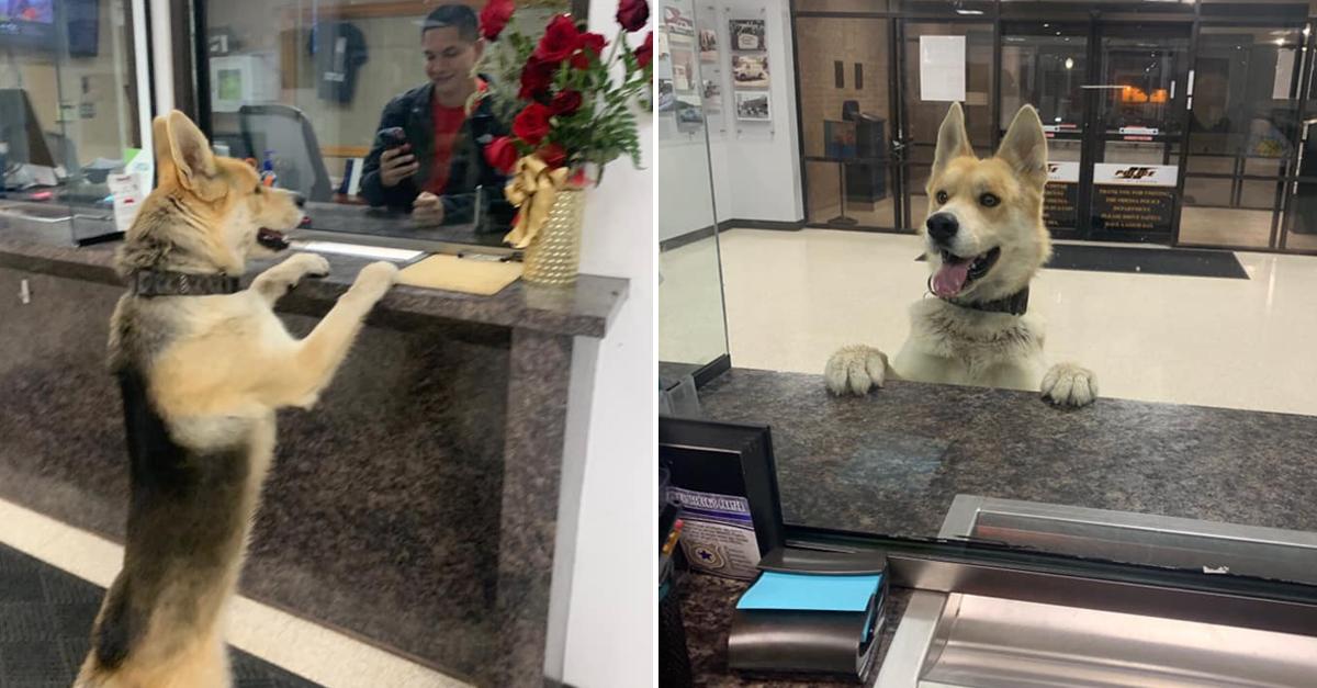 Cachorro entra em delegacia para 'informar' que está perdido 5