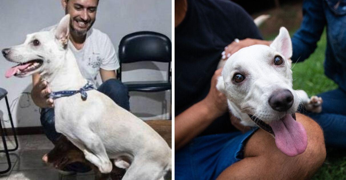 Casal adota cão com deficiência Tintim abandonado duas vezes