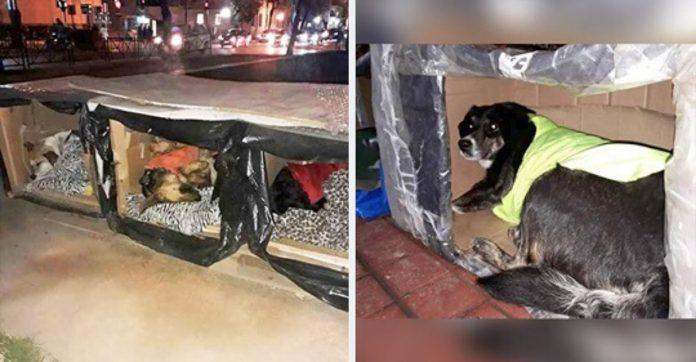Frio motiva anônimo construir casinhas térmicas cães de rua