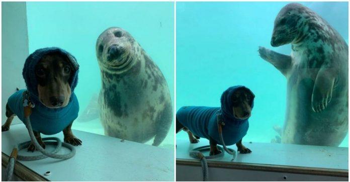 Amizade peculiar entre cachorro e foca viraliza nas redes sociais