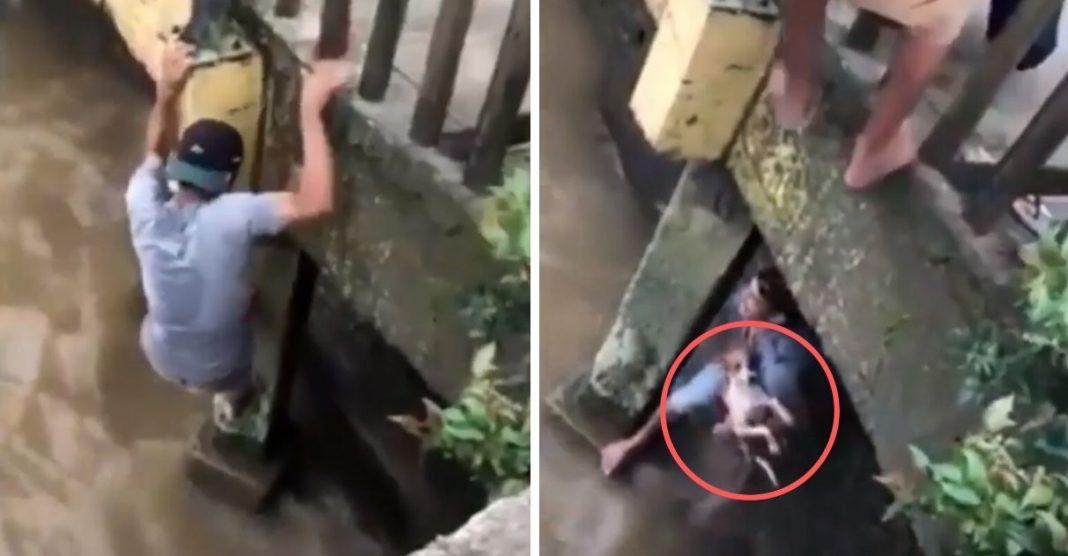 Rapaz desce ponte para salvar cachorra que estava se afogando