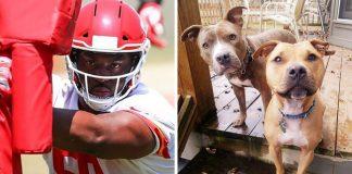 atleta vencedor super bowl paga despesas de adoção de 100 cães