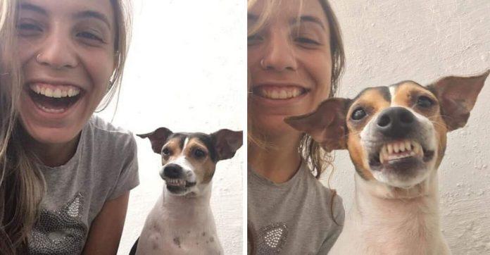 cachorro sorri em fotos