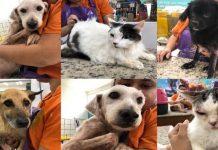 Pet shop organiza mutirão de resgate de animais em canil após chuva