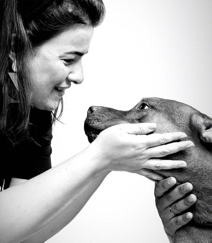 pitbull resgatado de rinha recebendo carinho
