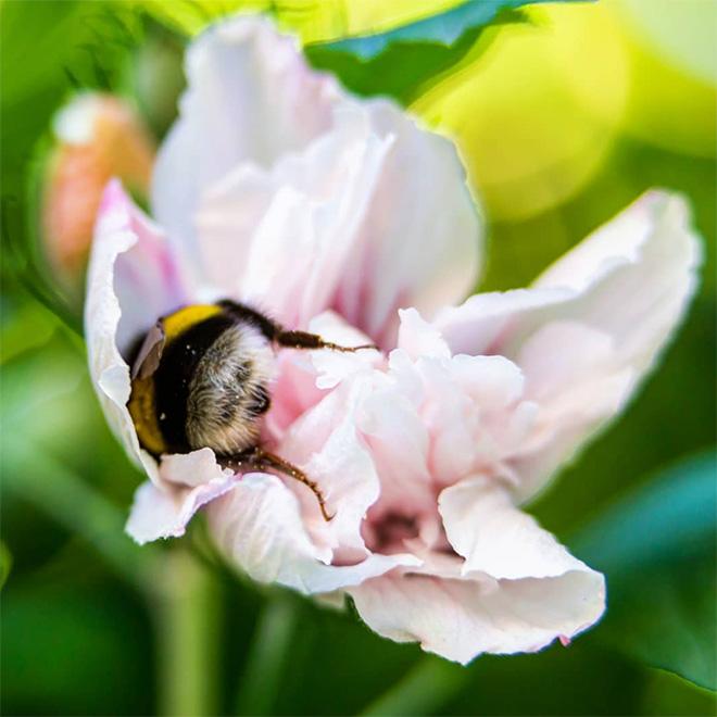 """Fotos de abelhas dormindo de """"bunda pra cima"""""""