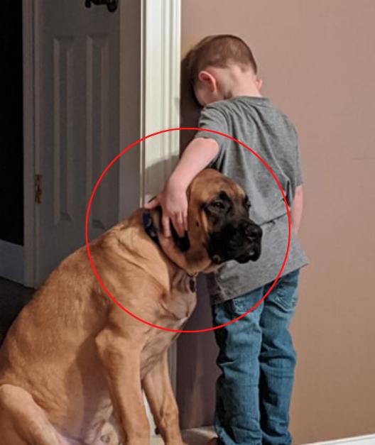 menino braço cabeça cão cantinho disciplina