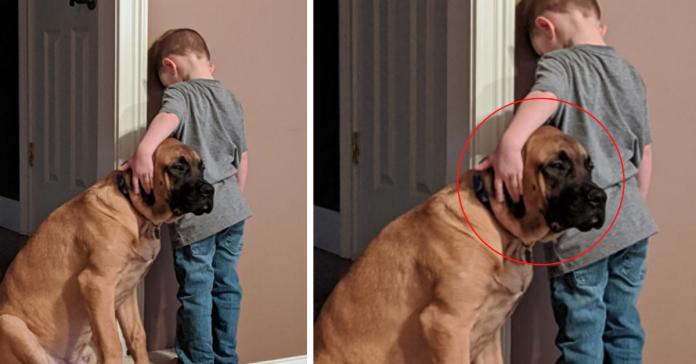cão menino cantinho disciplina