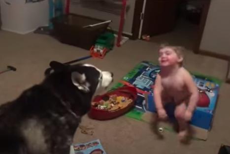 menino e cachorro husky uivando juntos