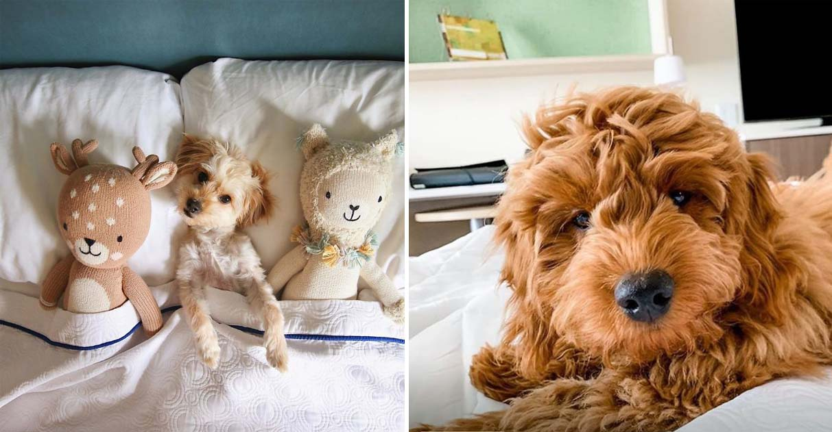 Hotel permite que hóspedes adotem cães de abrigo durante estadia 2