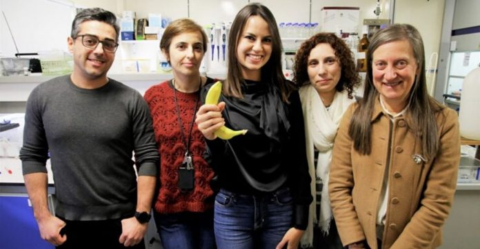 Cascas de banana purificação águas contaminadas metais pesados