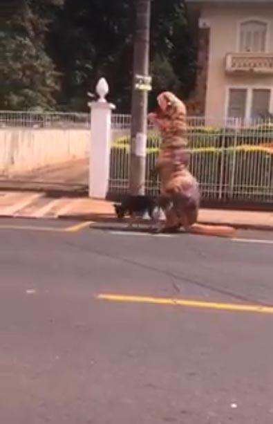dinossauro passeio cachorro rua