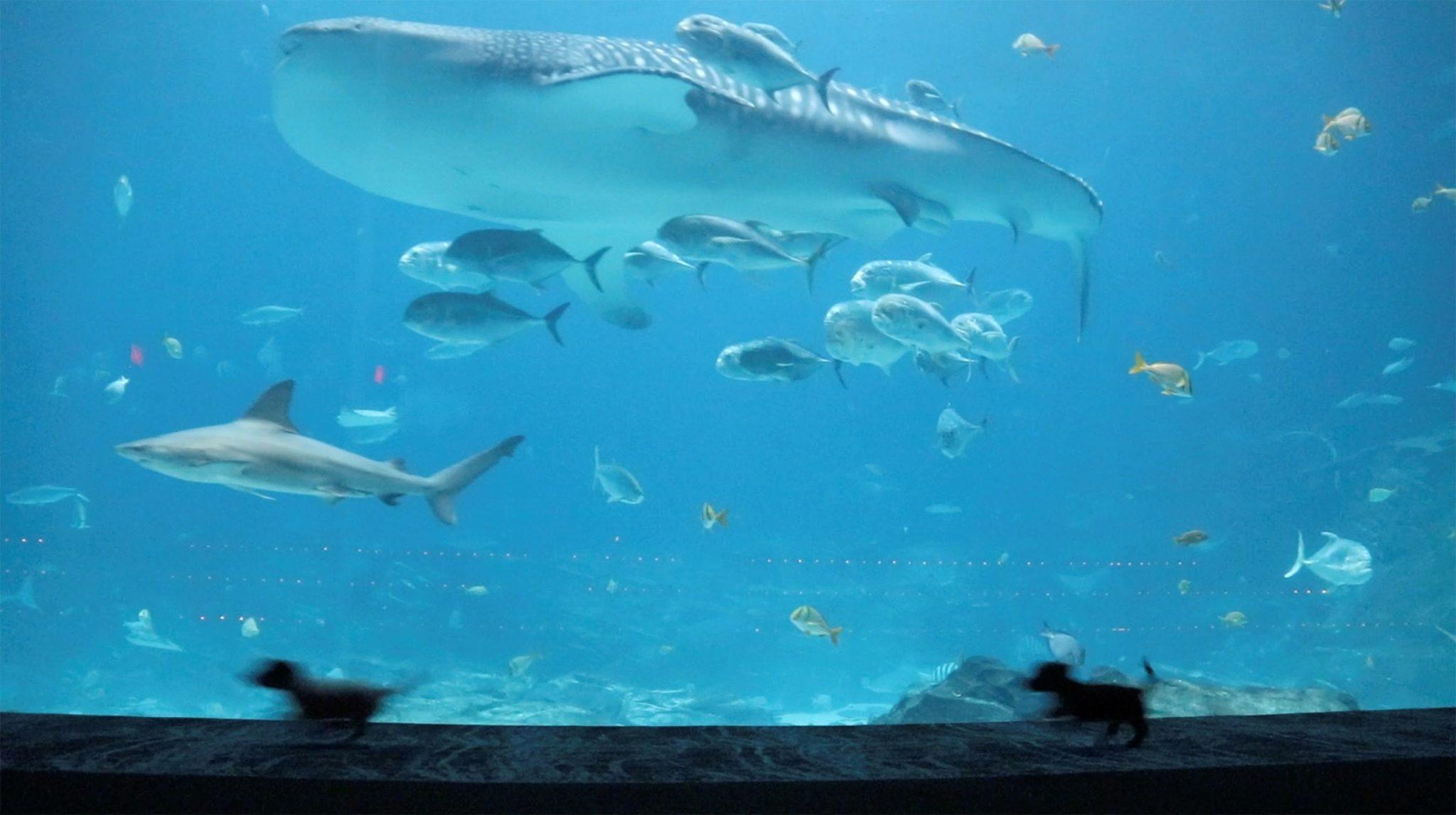 vídeo filhotes explorando aquário fechado para humanos
