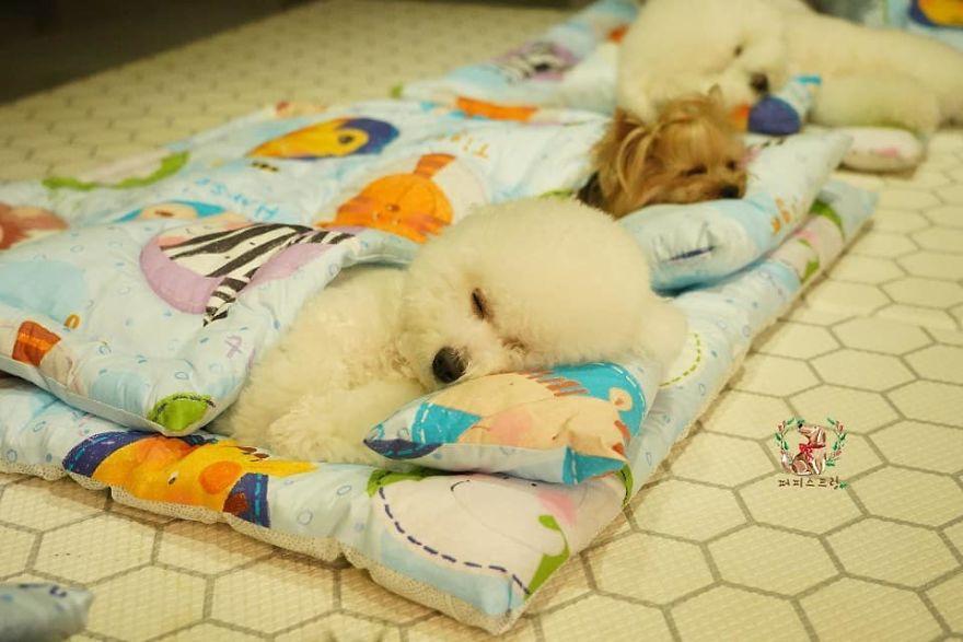 fotos filhotes fofos dormindo cochilo creche de cães
