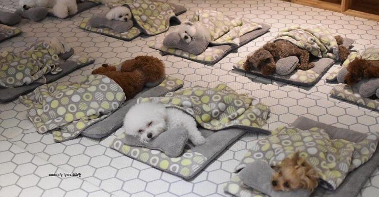 Fotos de filhotes fofinhos dormindo em creche de cães viralizam na web 1