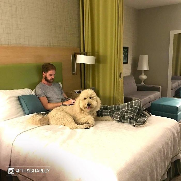 Hotel permite hóspedes adotem cães abrigo durante estadia