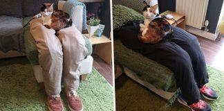 Casal cria pernas falsas para enganar gata