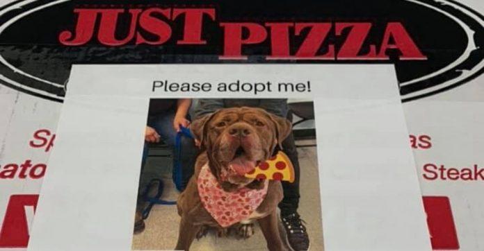 Pizzaria coloca fotos de cães em caixas de pizza e incentiva a adoção 1
