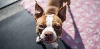 creche cães acolhe animais pessoas infectadas coronavírus