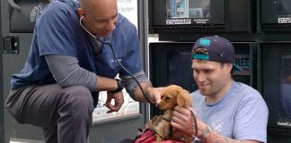 Veterinário trata cães de moradores em situação de rua