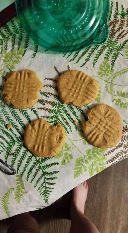 Gata abre tupperware cheia de biscoitos morde todos eles