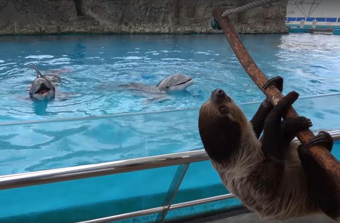 golfinhos recebem visita preguiça parque vídeo