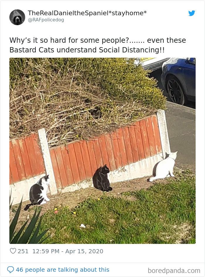 fotos animais seguindo regras distanciamento social
