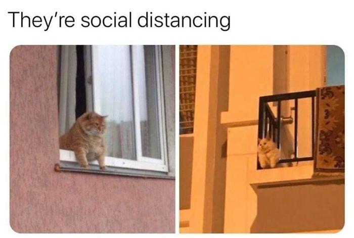 23 fotos que mostram que até os animais respeitam o distanciamento social 4