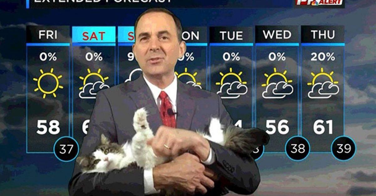 gata aparece live jornalista surpresa vídeo