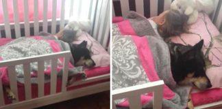 cachorro dorme em berço com bebê recém-nascido