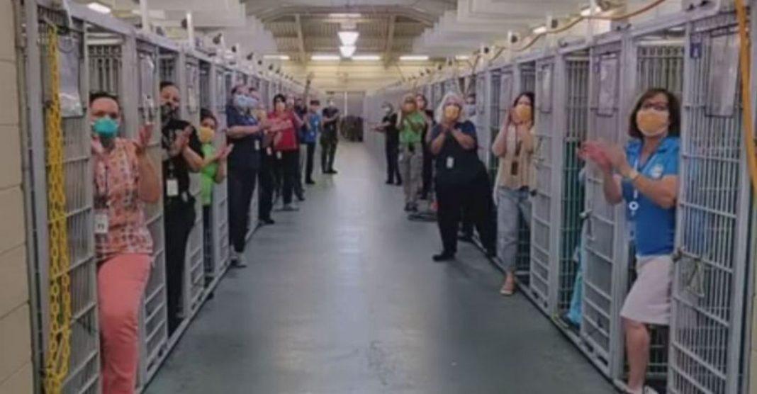 abrigo cães vazio alta demanda adoção quarentena