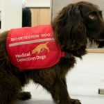 Cães farejadores são treinados para detectar pessoas infectados com Covid-19