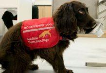 Cães treinados detectar pacientes infectados Covid-19 Inglaterra