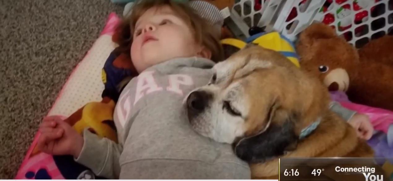menina escreve carta para o céu cachorra falecida obtém resposta