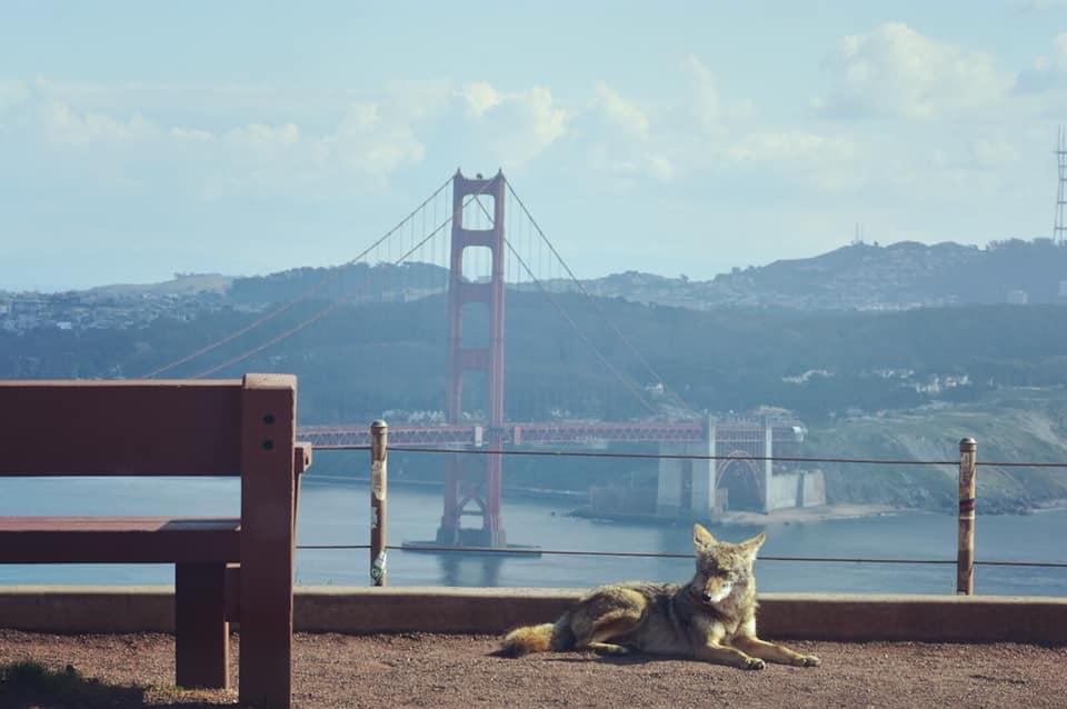 humanos quarentena animais estão ocupando cidades do mundo todo