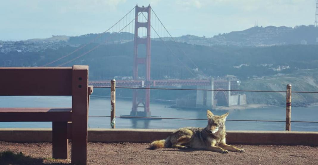 Com humanos em casa, animais selvagens estão ocupando ruas de cidades do mundo todo 2