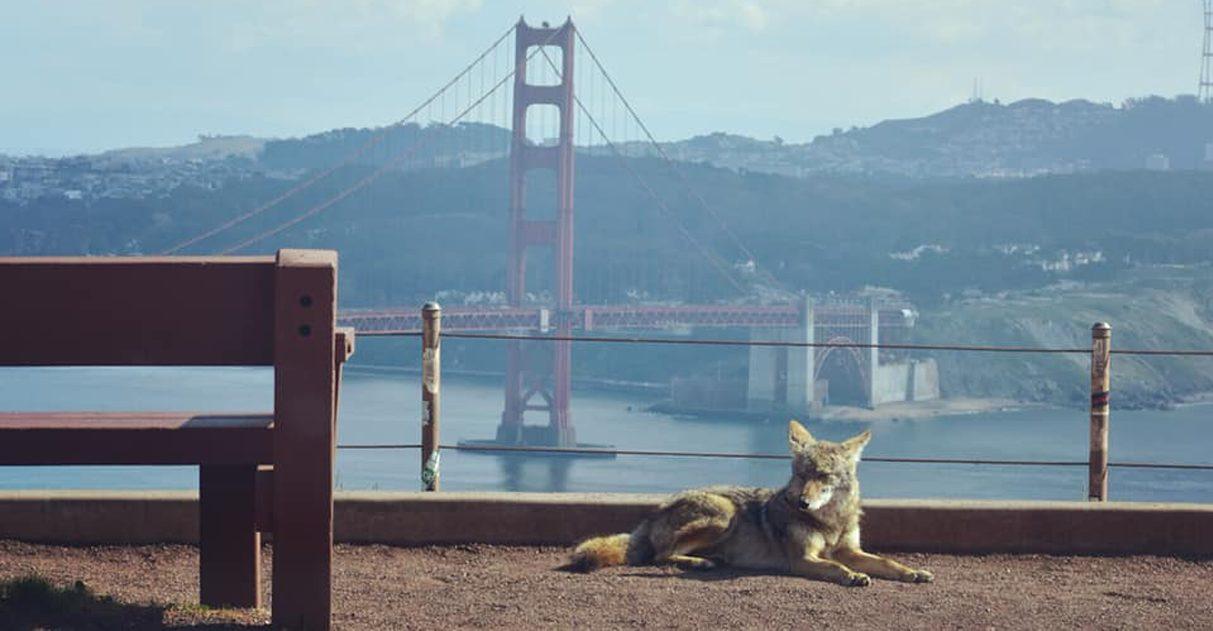 Com humanos em casa, animais selvagens estão ocupando ruas de cidades do mundo todo 1