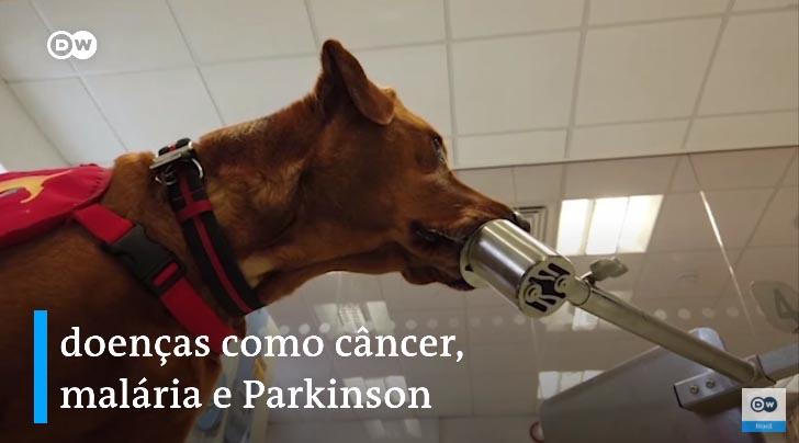 Cães farejadores são treinados para detectar pessoas infectados com Covid-19 1