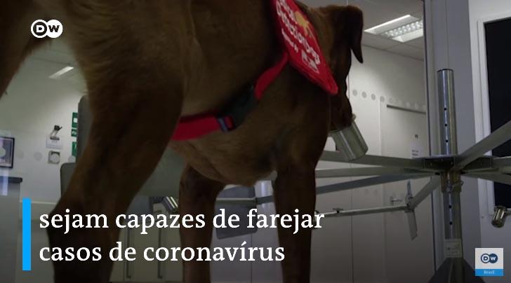 Cães farejadores são treinados para detectar pessoas infectados com Covid-19 2