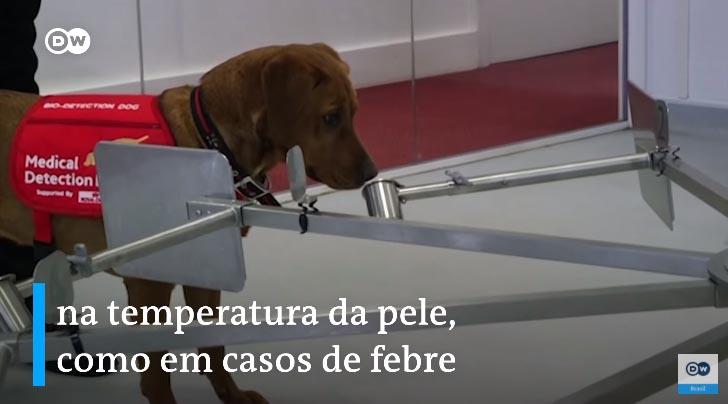 Cães farejadores são treinados para detectar pessoas infectados com Covid-19 3