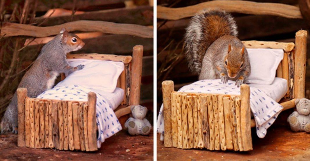 fotógrafa monta jardim casa esquilo se aconchegar